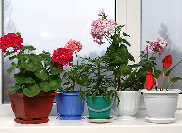 Комнатные растения для всех сторон света