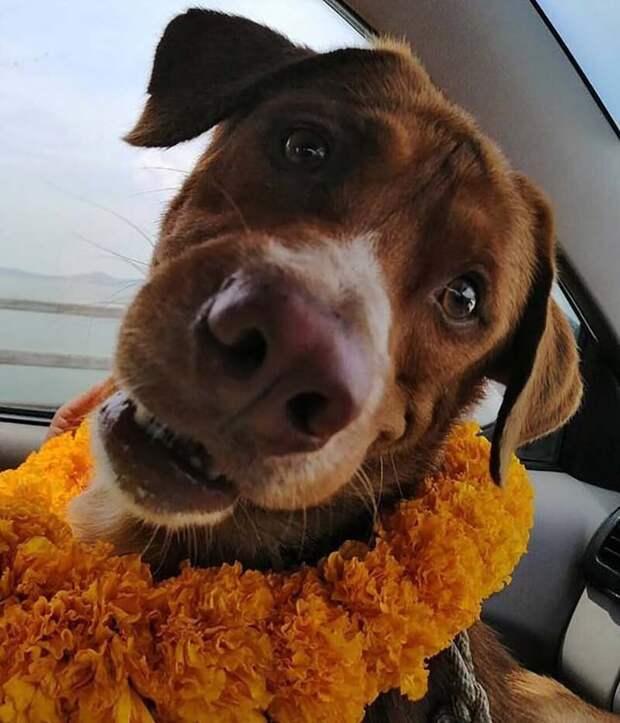 В Таиланде спасли собаку, которая была обнаружена посреди Сиамского залива в 217 километрах от берега в мире, добро, животные, история, люди, поступок, собака, спасение