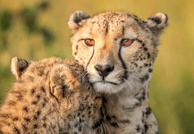 Чудесные изображения африканских диких животных от Жако Маркса