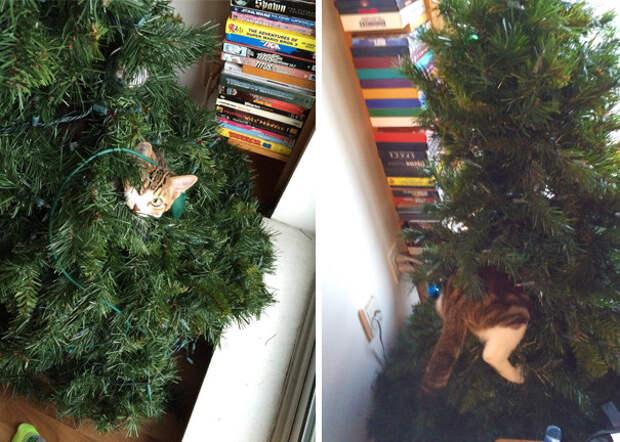 25. Это было тяжелое восхождение  елка, кошка, подборка
