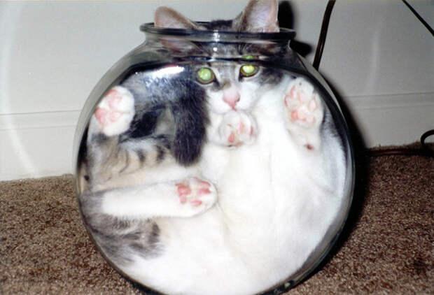 33.  кот, поза