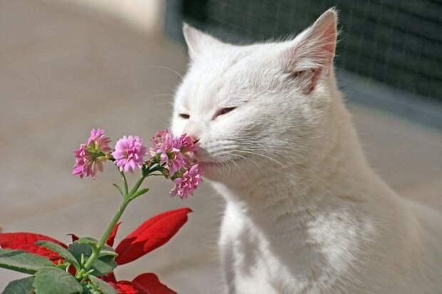 Кошки тоже любят цветы, как и мы!