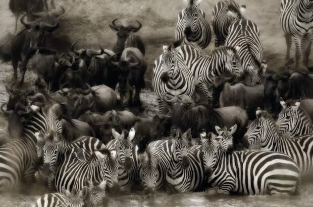 Дикая сторона Африки