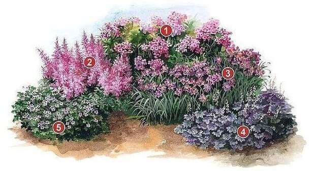 Для цветоводов —клумбы из многолетников – лучшие схемы посадки