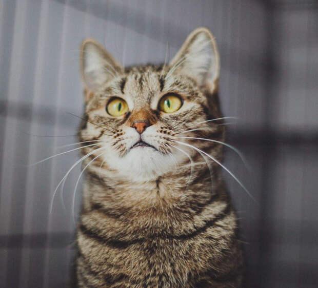 Пятничная кошечка Тося – дитя подземелья ищет теплый дом!