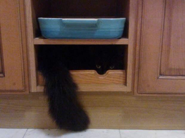 Непревзойденные мастера скрытности! Скрытность, кошки, подборка, прикол, юмор