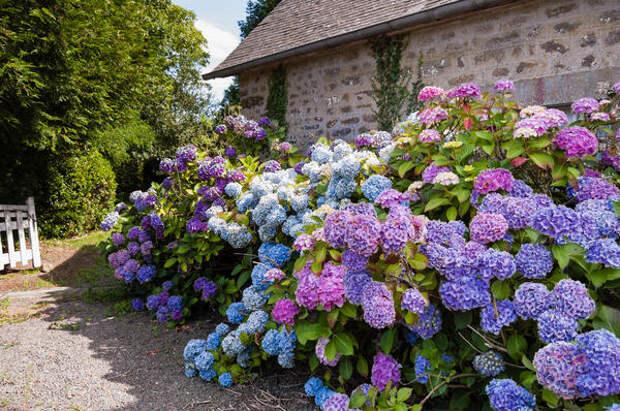 Если нужно сгладить углы, прикрыть стыки мощений - нет лучшего декоратора, чем цветущие растения