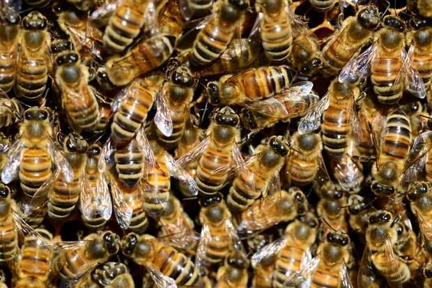 Более 15 тыс. пчёл атаковали припаркованный автомобиль