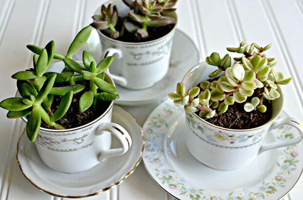 4. Чашечки с суккулентами винтаж, посуда, совет, хитрости