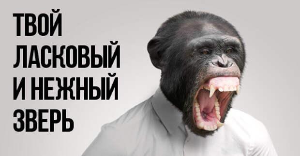8 доказательств того, что мужчина – это животное. В гифках