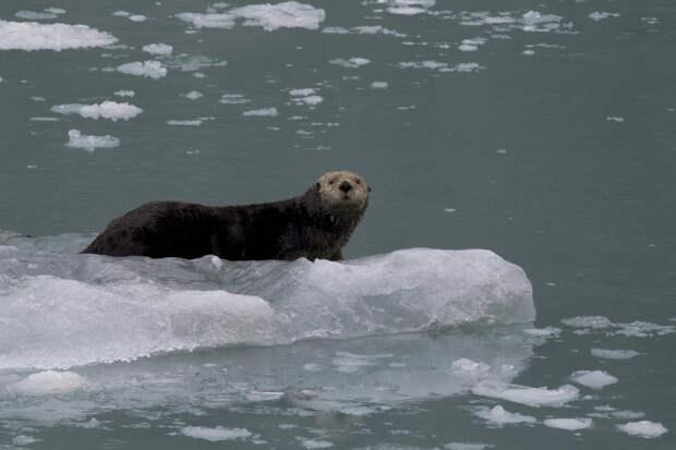 Могла ли Аляска остаться русской? Мифы и реальная история