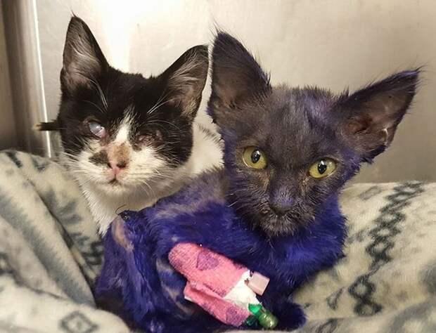Спасенный фиолетовый котенок подружился со слепым соседом по приюту