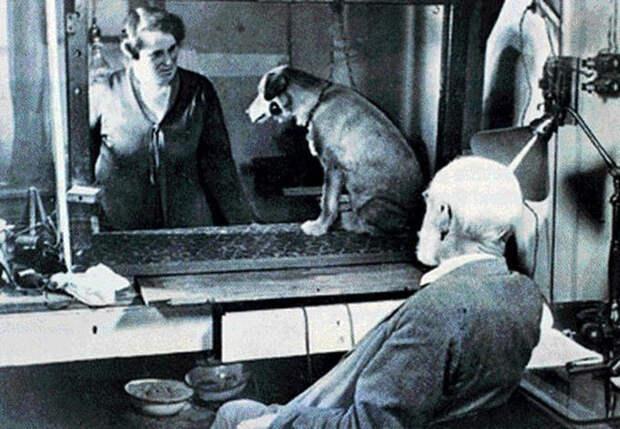 10 известных экспериментов с людьми и животными, которые вошли в историю психоанализа