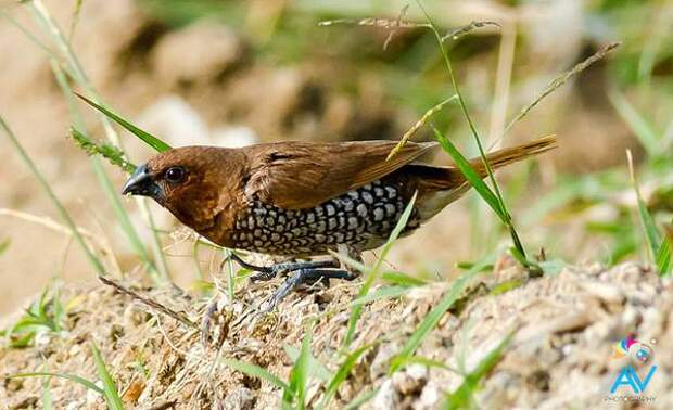 Самые популярные декоративные птицы