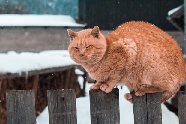 6 фактов о котах, которые вы не знали: предпочтения в музыке, еде и выборе друзей