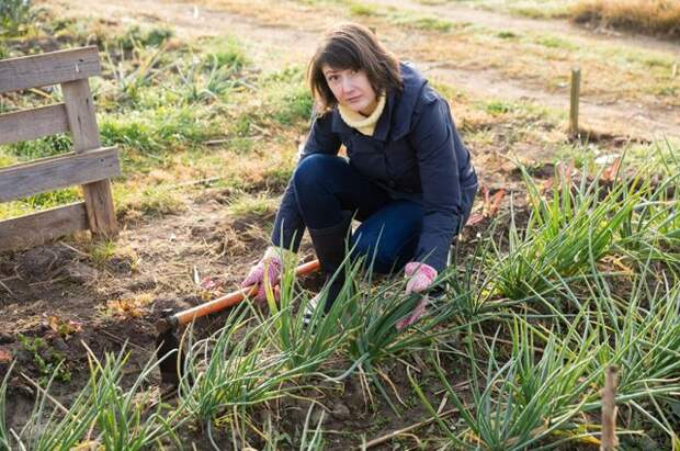 Последний урожай. Скороспелая зелень продлит огородный сезон