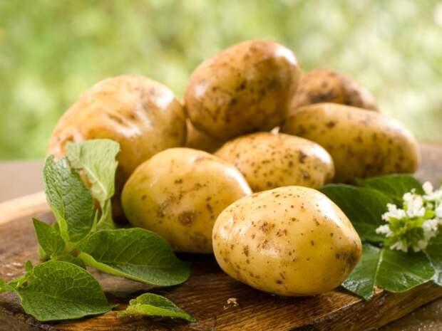 Польза картофеля для здоровья