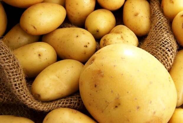 Мой метод подготовки картофеля к хранению