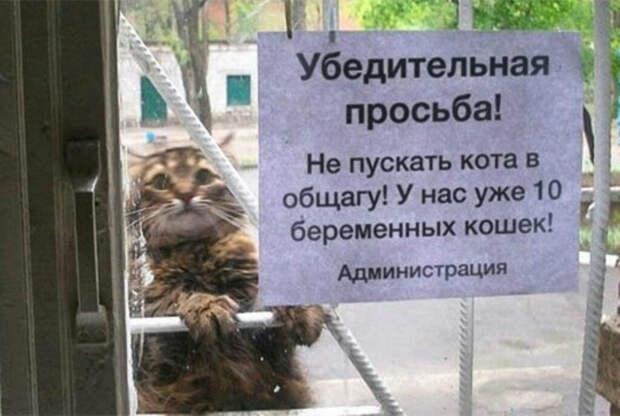 По мнению Novate.ru, Барсик собирался оплодотворить всех. | Фото: Pinterest.
