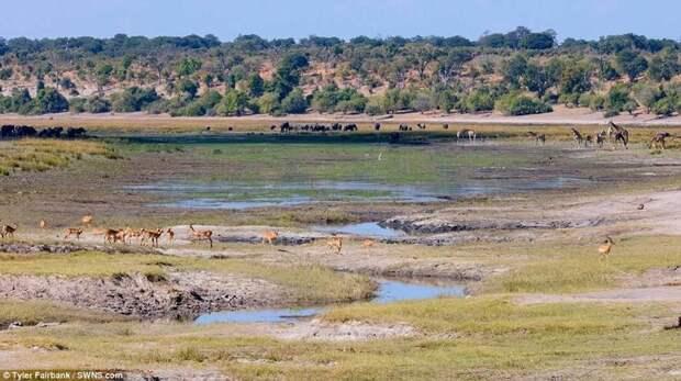 Животный мир Ботсваны в таймлапс- видео