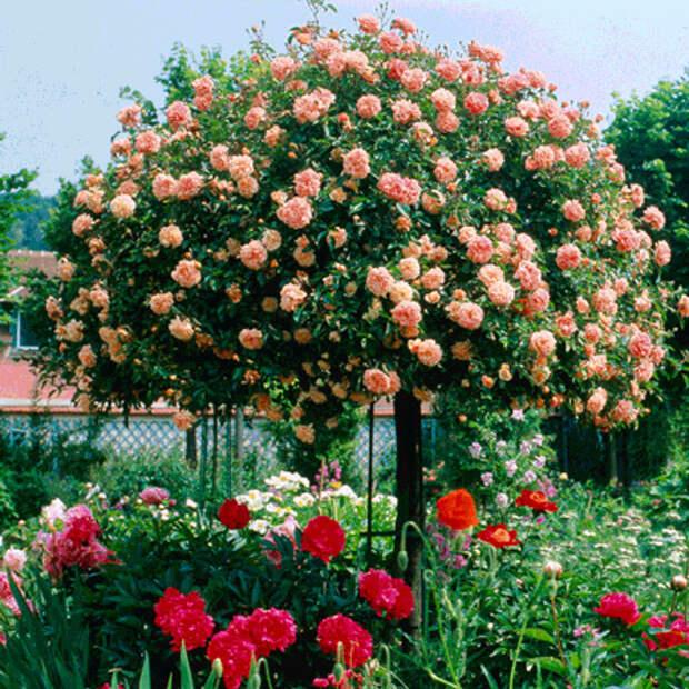 4497432_rosesingardeninspiration34 (450x450, 187Kb)