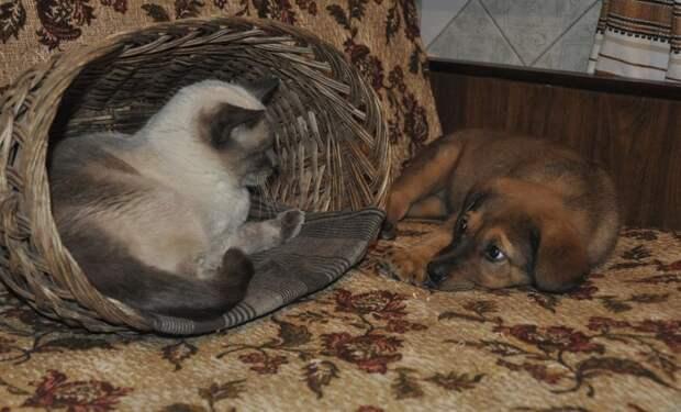 Как кошка с собакой!