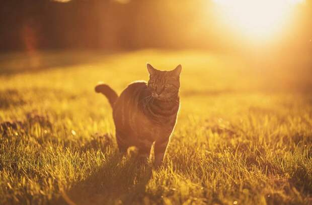 Вдохновение, навеянное котами: самые красивые портреты пушистых любимцев