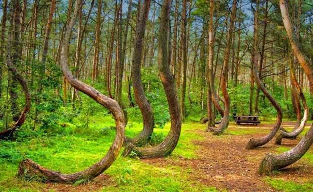 Самые невероятные леса мира