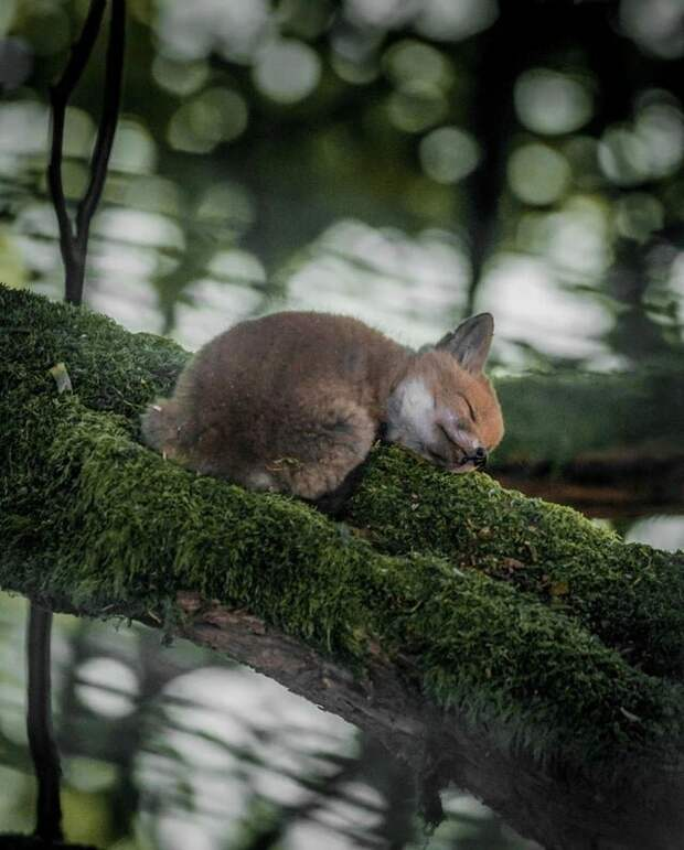 10 моментальных снимков природы, которые способны удивить