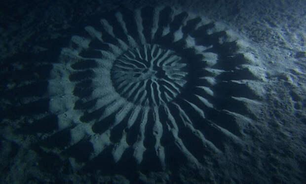 Подводные круги рыбы фугу животные, факты