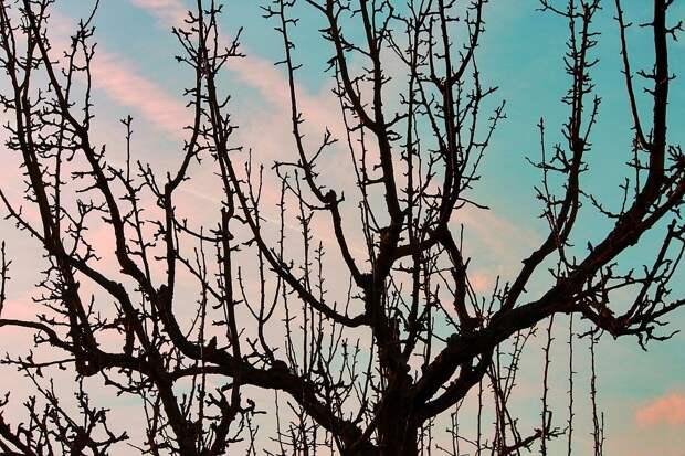 Плодовых Деревьев, Силуэт, Эстетический, Отраслей