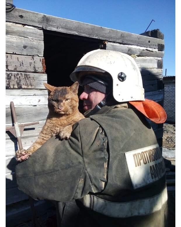 Котики, спасенные во время пожара: 20 трогательных фотоисторий