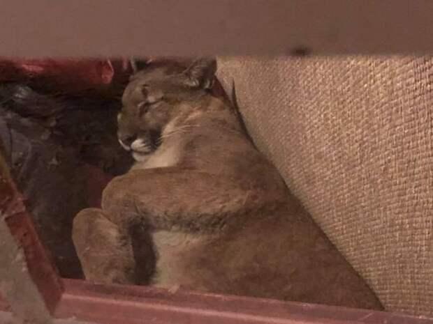 Девушка обнаружила в своем доме незваного гостя животные, коты, юмор