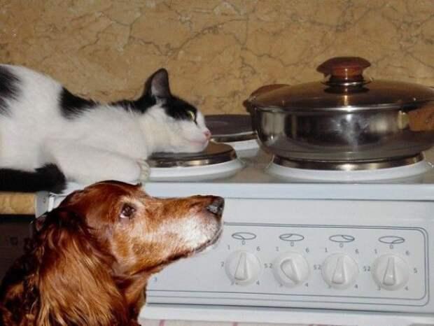 Братья наши меньшие, которые очень хотят кушать вкусно, еда, животные