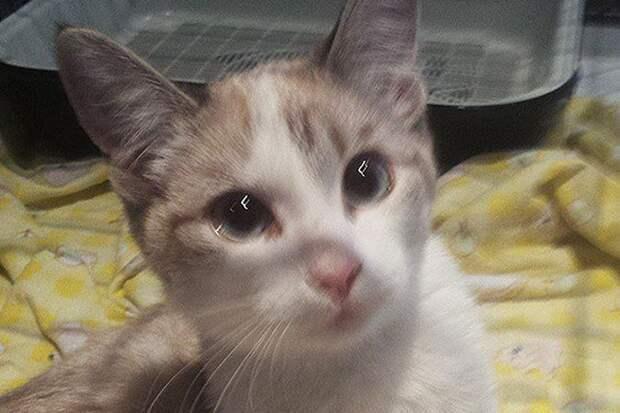 В Новосибирске котенок выжил, упав с 19 этажа и приземлившись на «Лексус»