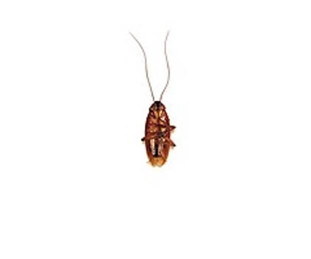 Жизнь и смерть таракана на журнальном листе
