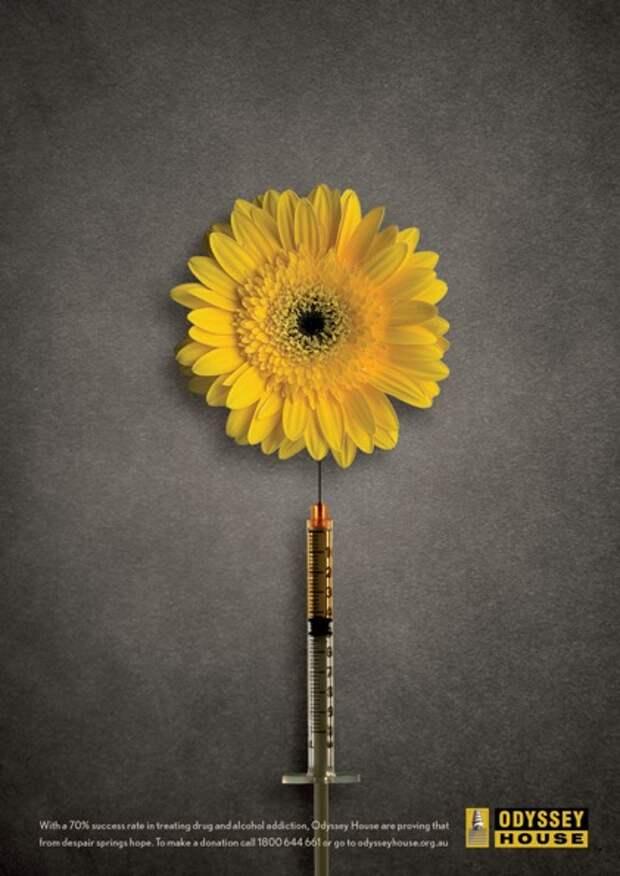 И на иглах растут цветы