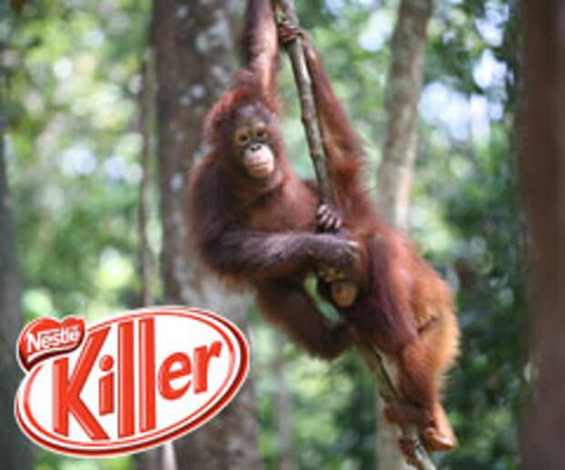 Greenpeace «наехал» на Nestle за убийство орангутангов