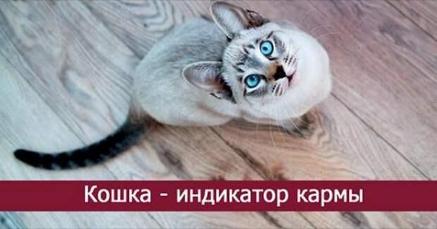 Кошка — индикатор кармы