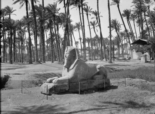 Раскопки Альфреда Моуда. Мемфис. Базальтовый сфинкс в пальмовой роще. 1934