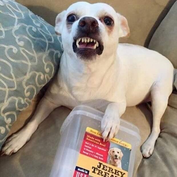 2. Собаки очаровательны в любое время животные, забавно, милота, подборка, собака, умора, юмор