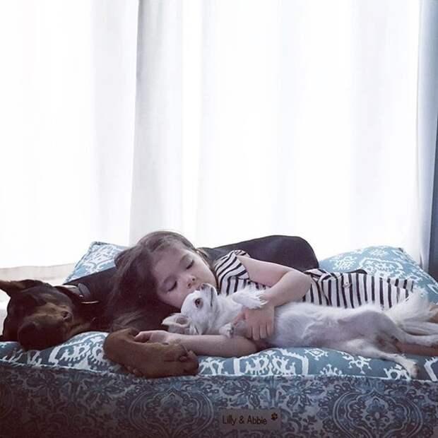 Пользователей сети умилил спящий в детской кровати пес
