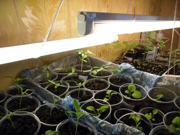 Люминесцентные лампы в домашнем огороде