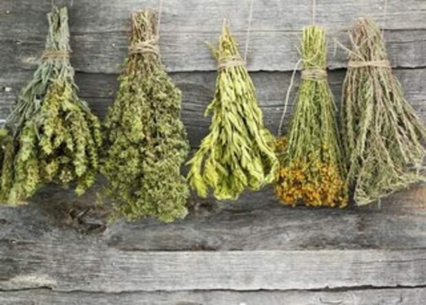 Лекарственные растения, которые нужно собирать в июне