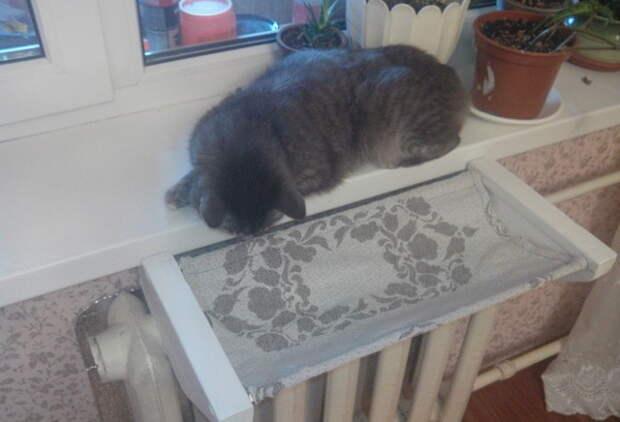 Осмотр изделия заказчиком. батарея, кот, лежанка, старость, тепло