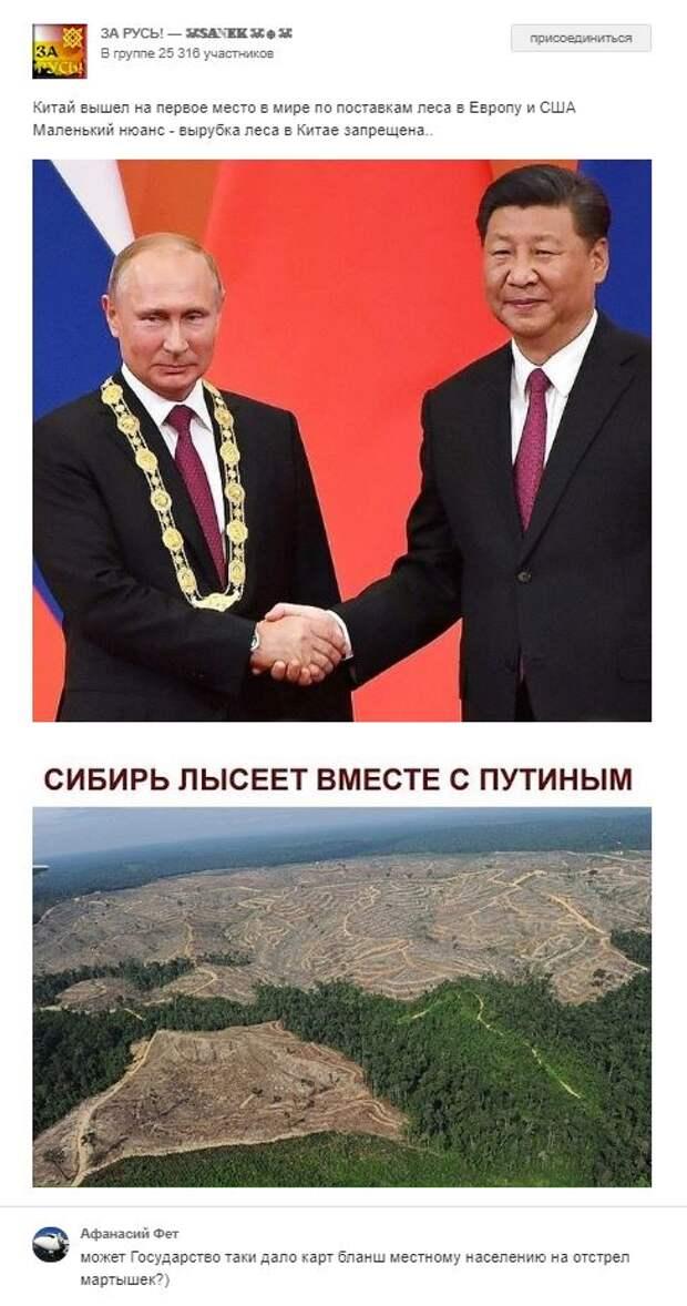 Западные эксперты потоптались по лжи о «вырубленной Сибири»