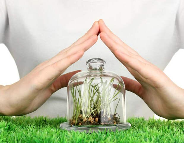 Сегодня пойдет речь о средствах защиты растений