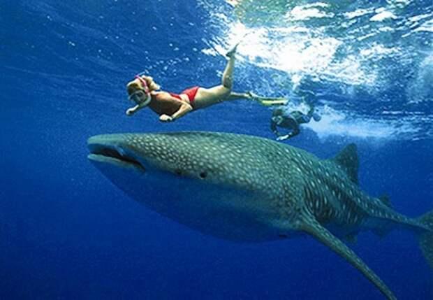 Знакомство с акулой