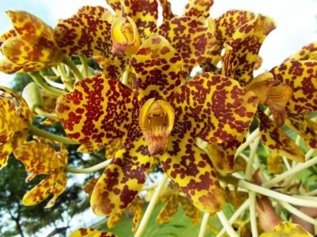 12 малоизвестных фактов об орхидеях