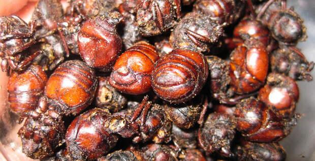 Самые экзотические блюда Земли, которые внушают ужас в мире, еда